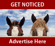 Get Noticed (Wirral Horse)