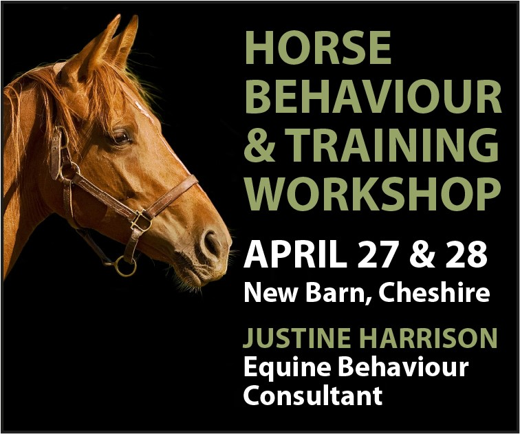 Justine Harrison Workshop April 2019 (Wirral Horse)