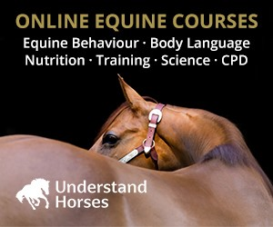Understand Horses (Wirral Horse)
